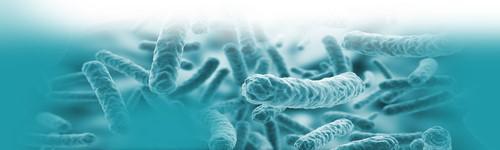 Bactériologie